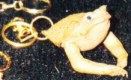 toad head key fob